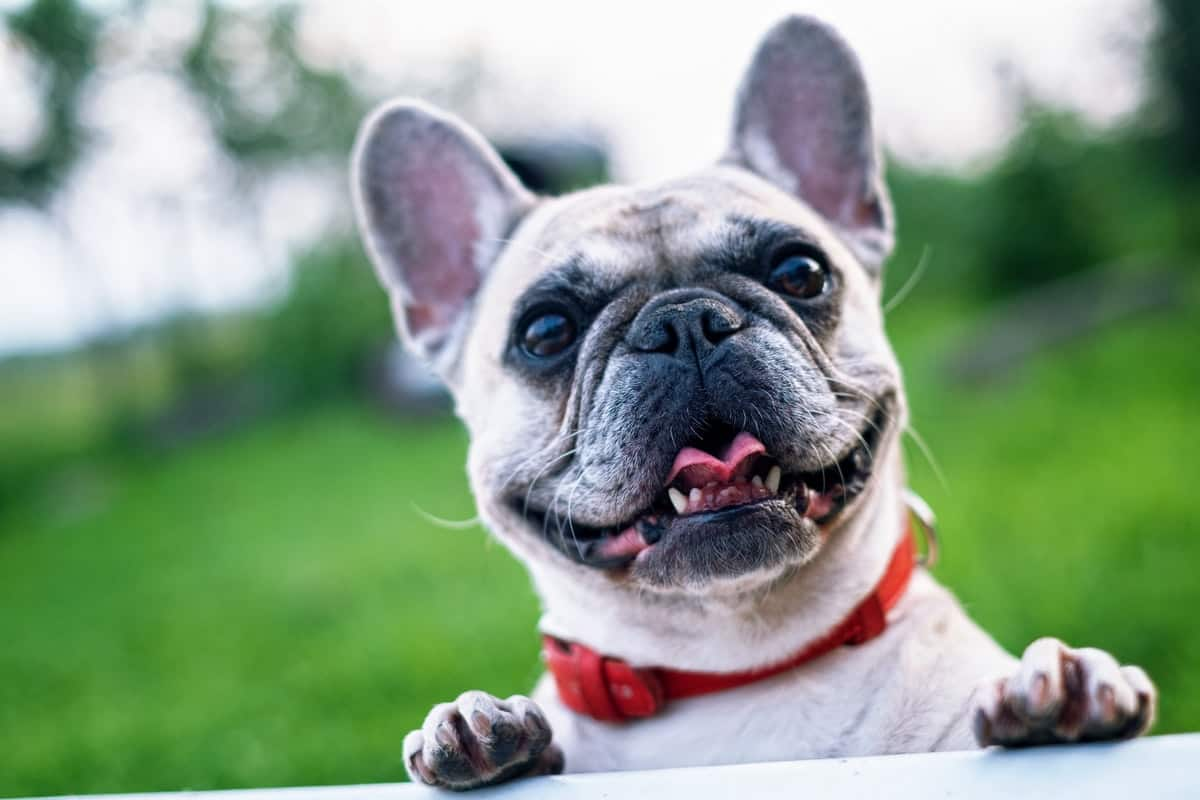 5 Great Ways to Honor your Pet