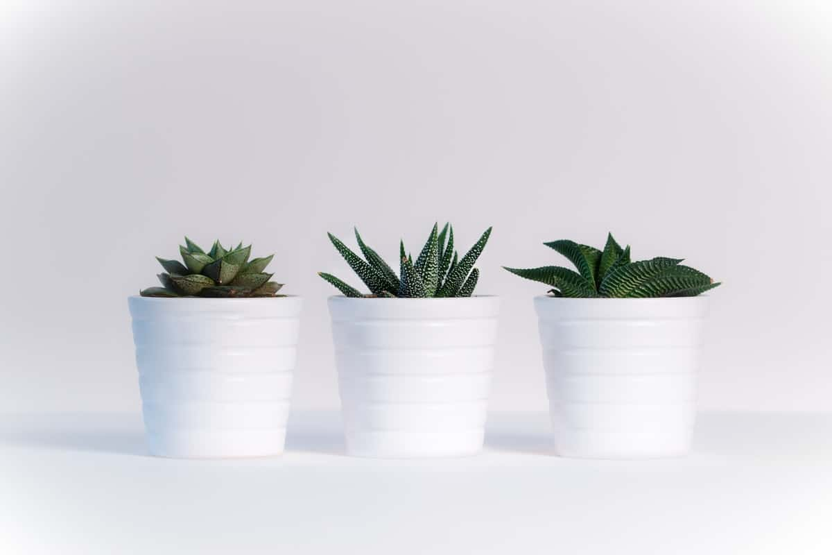 6 Great Tips for Caring for Houseplants